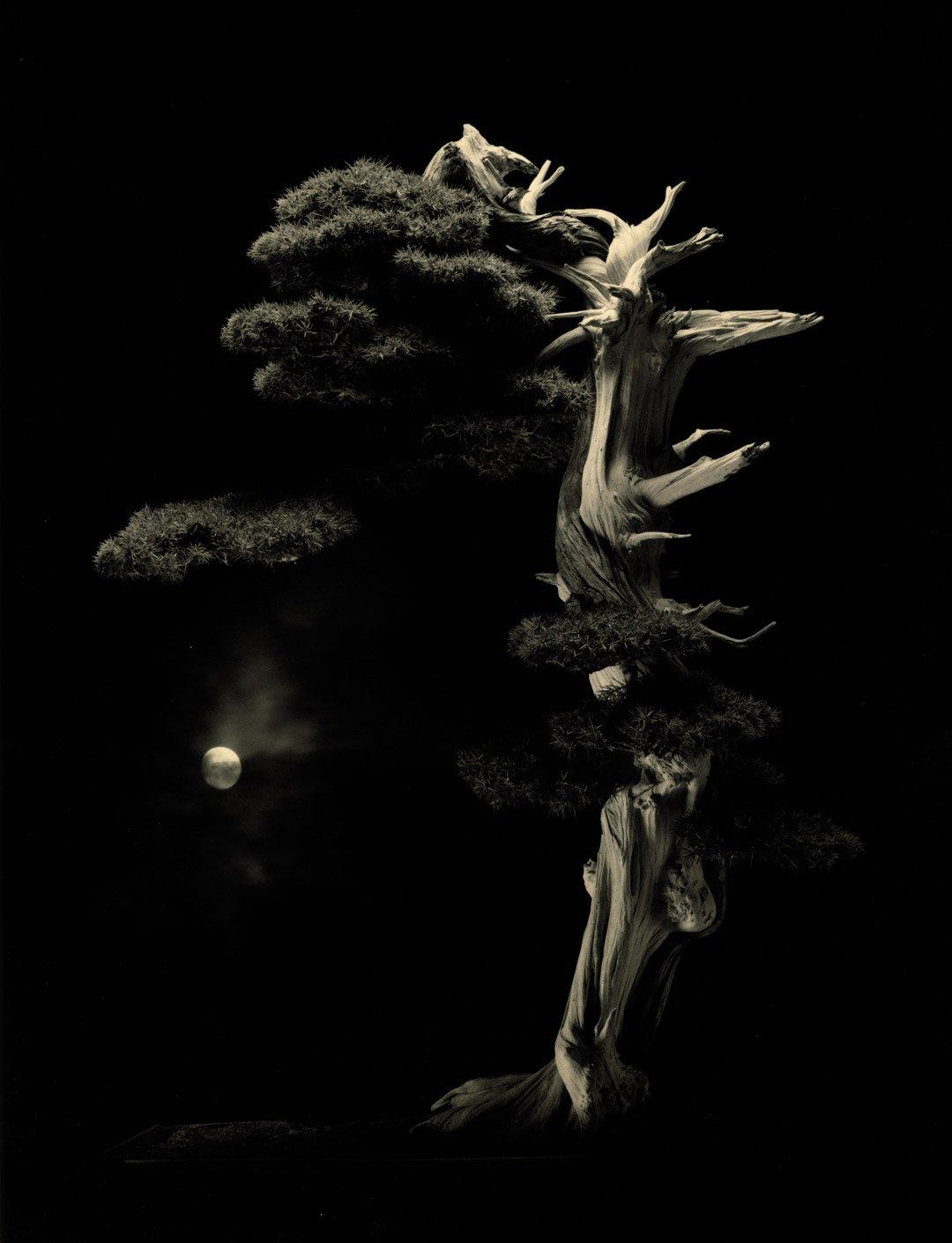Masao Yamamoto | La Fotografía Magazine