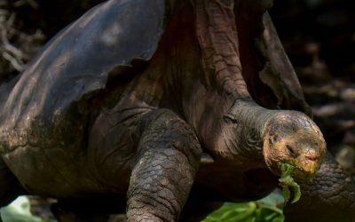 El salvador de la especie: 100 años y dale-que-te-pego